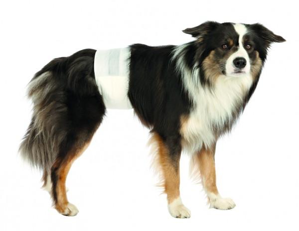 Hundeinkontinenz Rüdenwindel