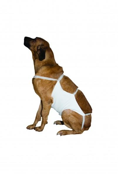 Bauchverband für Hunde
